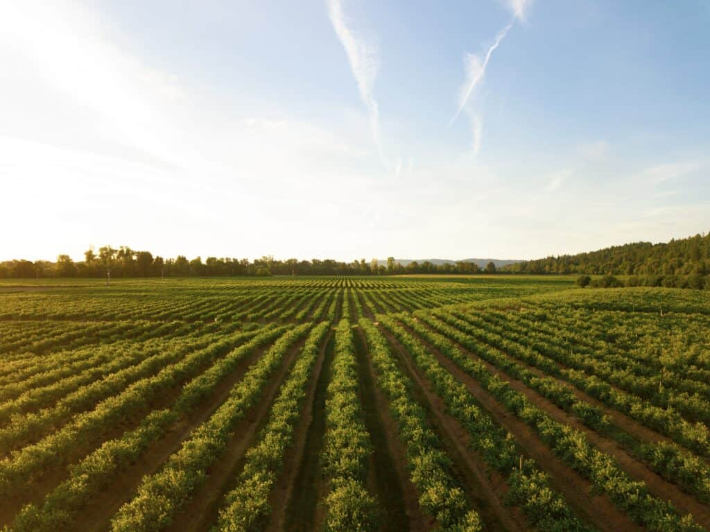 Regenerative Agriculture: What It Is and Why It's So Important for Health and the Environment